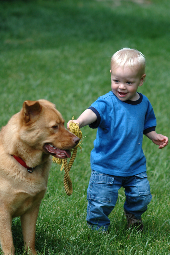 Keeping Your Toddler Safe Around Animals Today S Parent