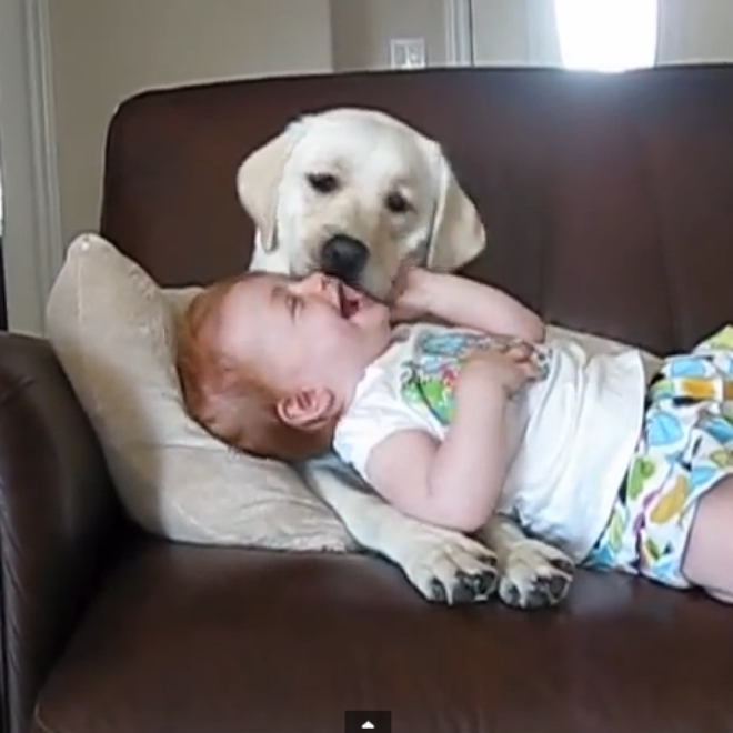 dog-and-baby-videos