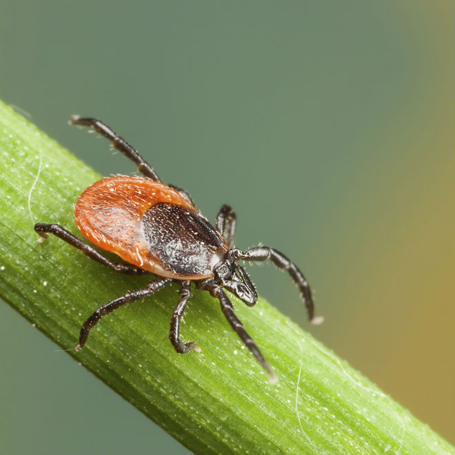 how-to-remove-ticks