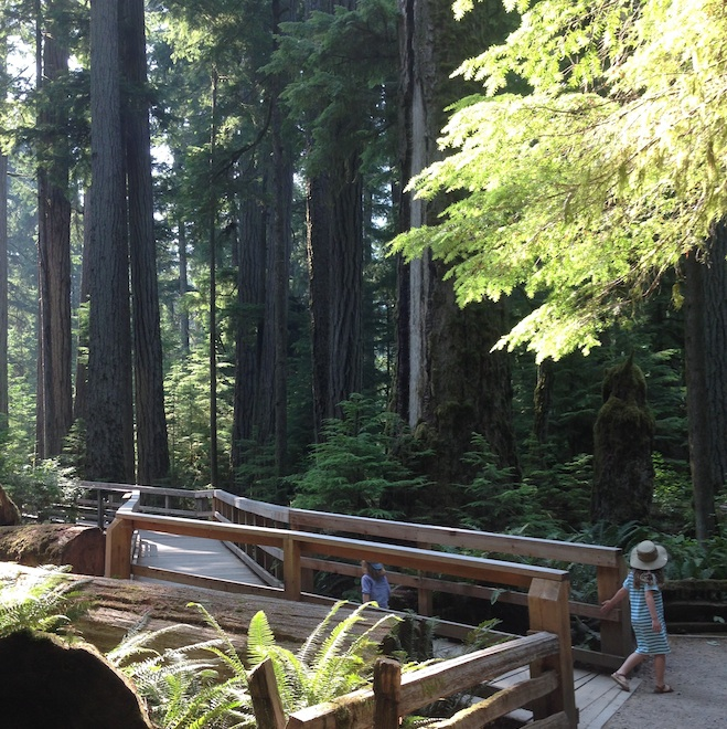 Cathedral Grove on Vancouver Island: Lauren Ferranti-Ballem