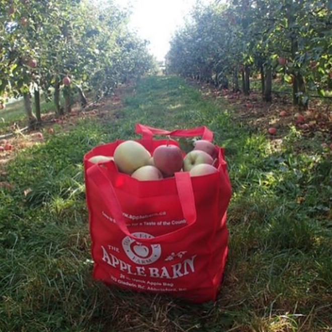 Best apple orchards and farms across Canada
