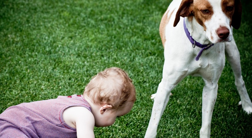 toddler plays in grass with dog