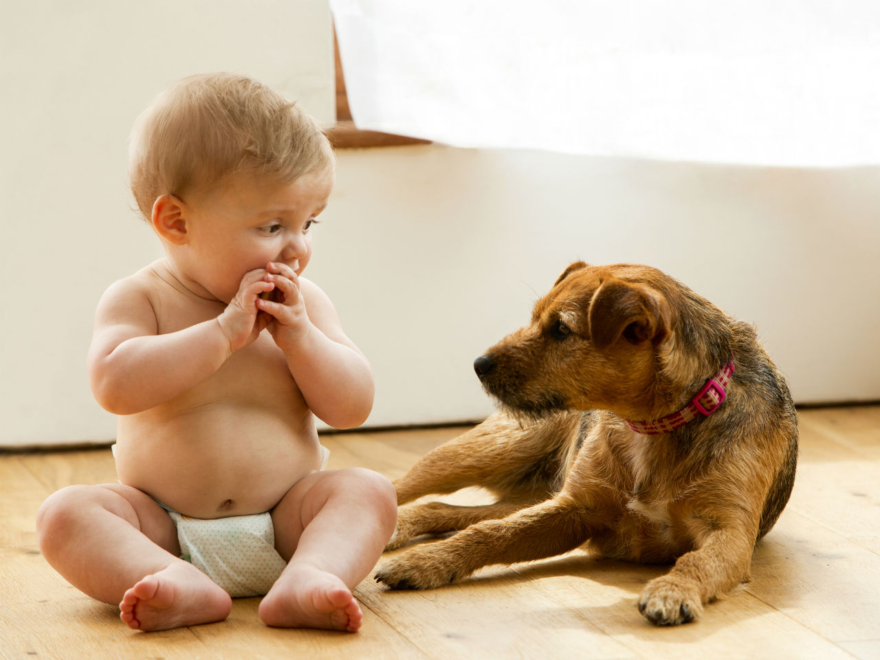 Pets reduce the risk of obesity and prevent allergies in babies