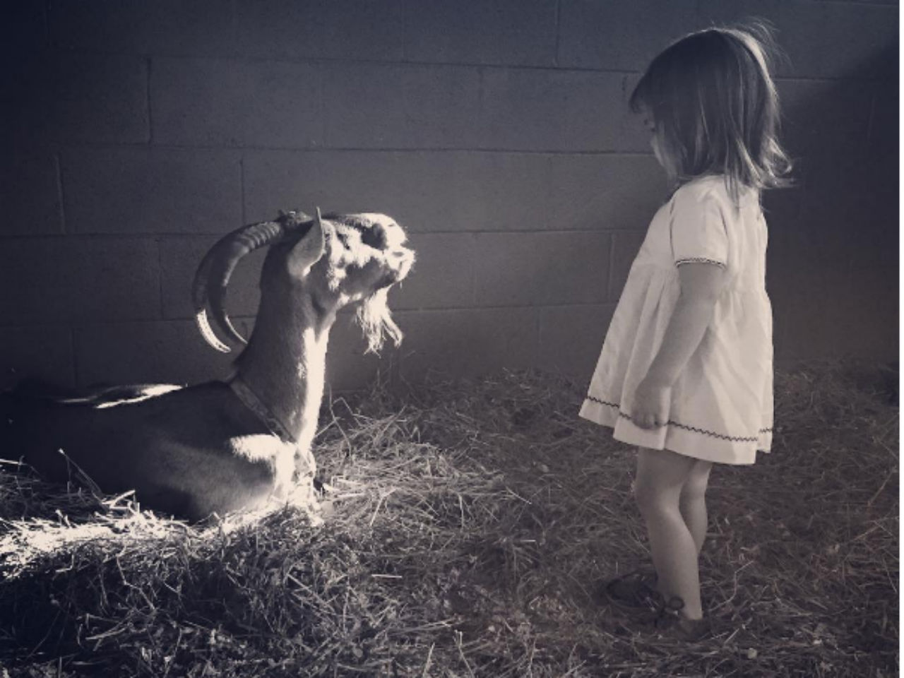 channing tatum's daughter with a goat in a barn