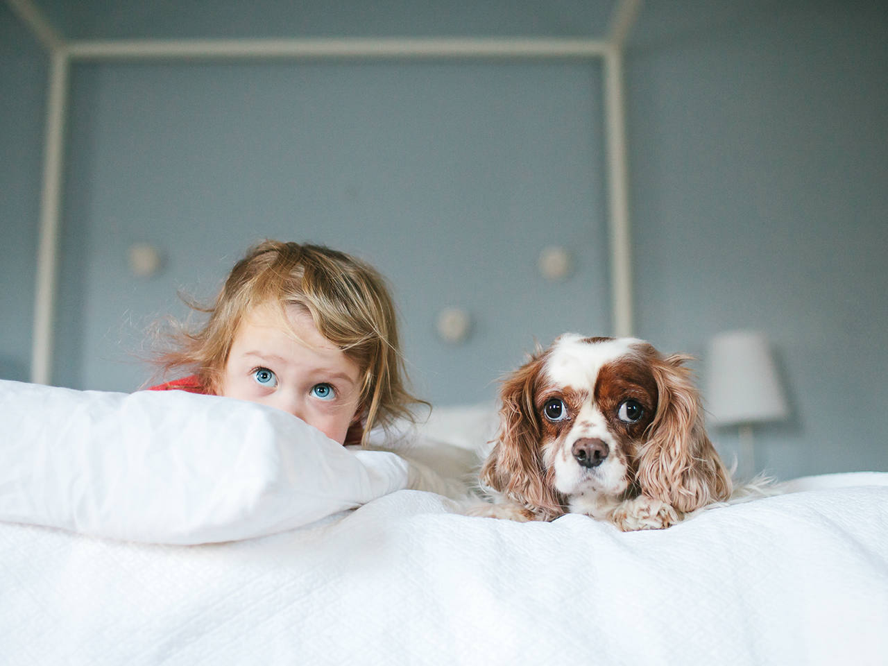 10 best dogs for kids