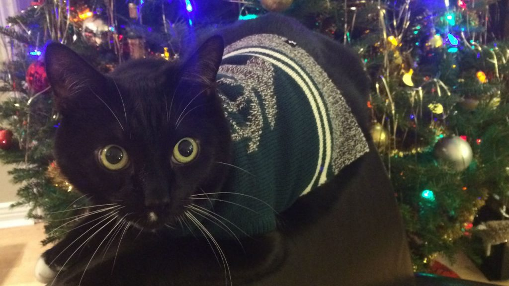 milo the black cat in a christmas sweater