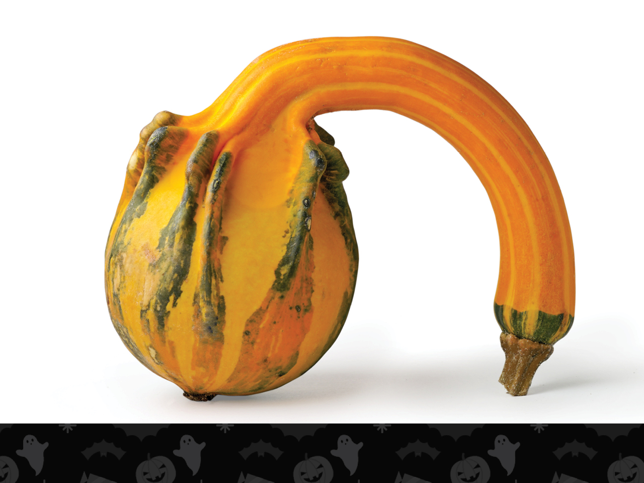 tired looking gourd with a limp stem