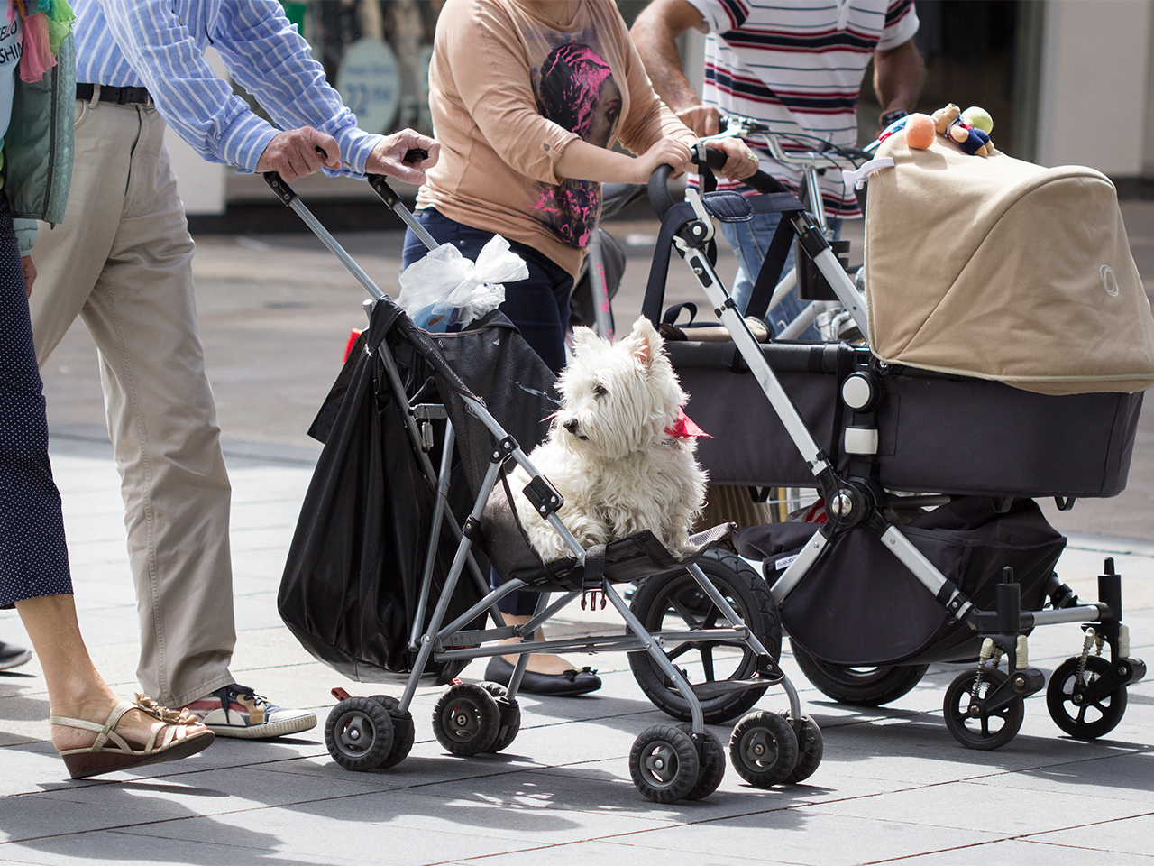 Peoplepush strollers down the street, one has a dog in it