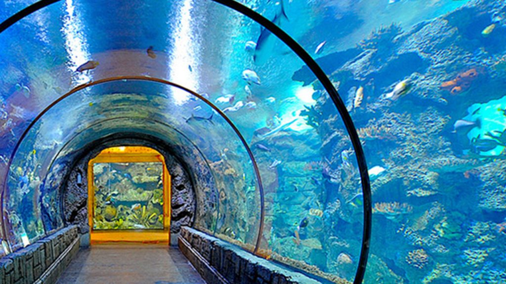 Photo of the Shark reef tunnel at the Shark Reef Aquarium at Mandalay Bay