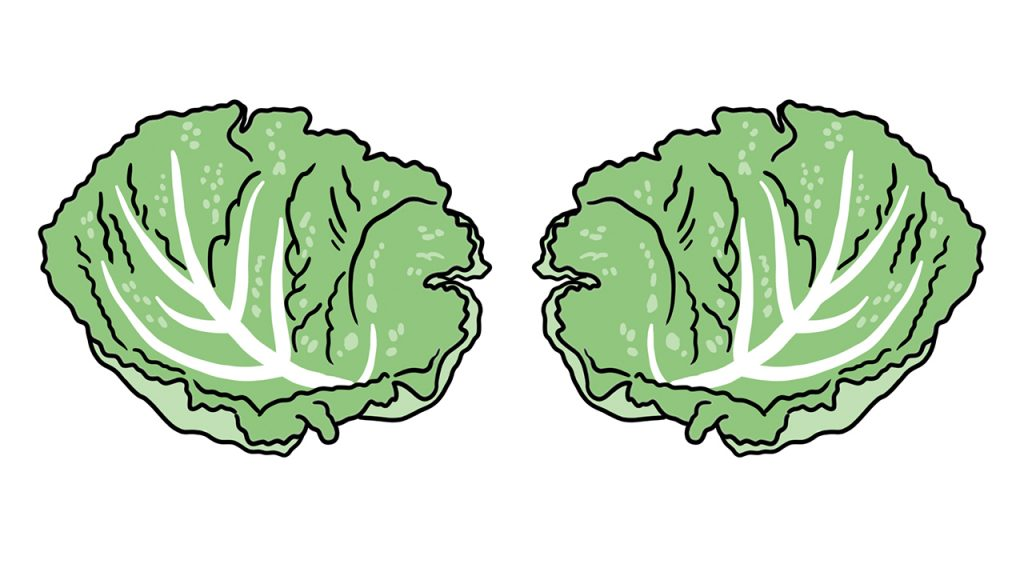 illustrated cabbage leaves