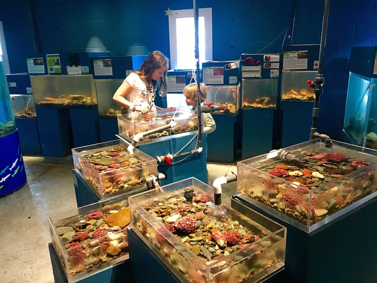 Petty Harbour mini aquarium and writer's kids