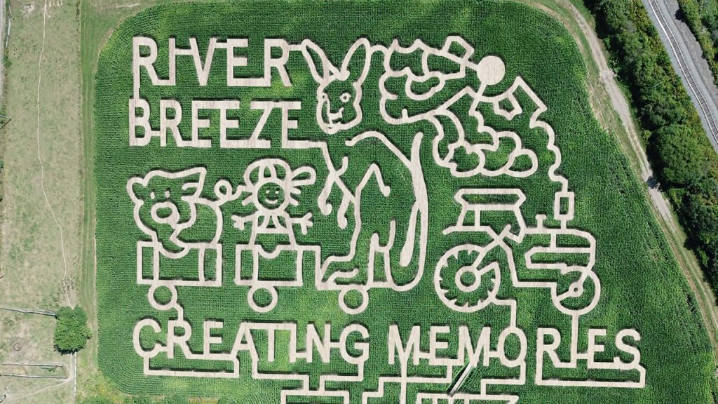 Aerial view of a corn maze with a bunny and tractor