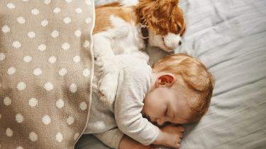 baby and the puppy enjoying their nap together