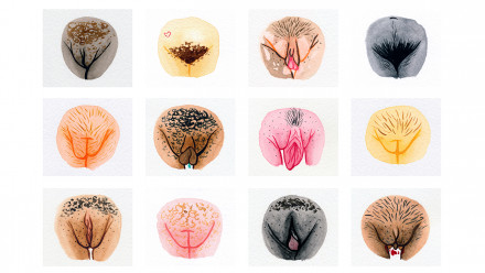 Illustrations of different vulvas
