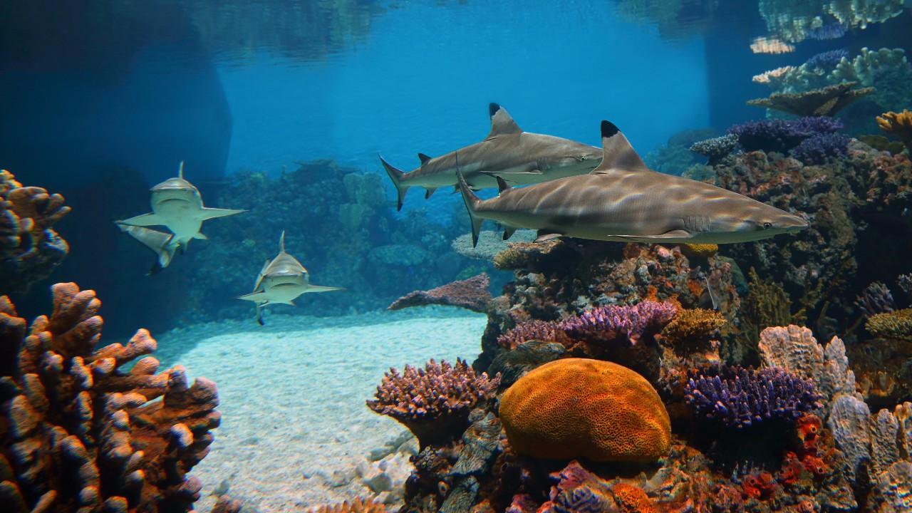 things to do in baltimore sharks swimming in a reef