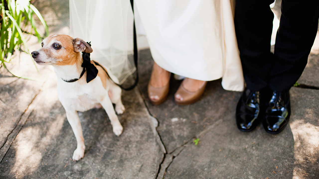 wedding photo that includes the authors dog wearing a formal leash with a black bow