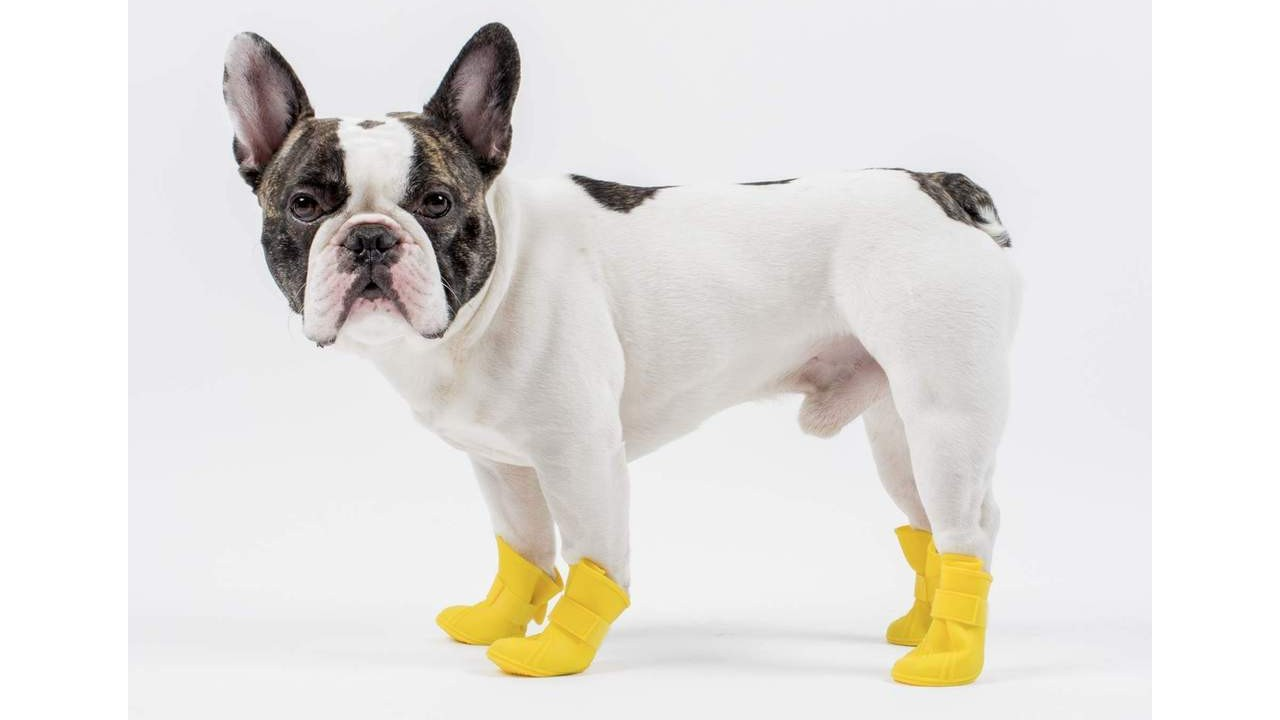 dog wearing yellow boots