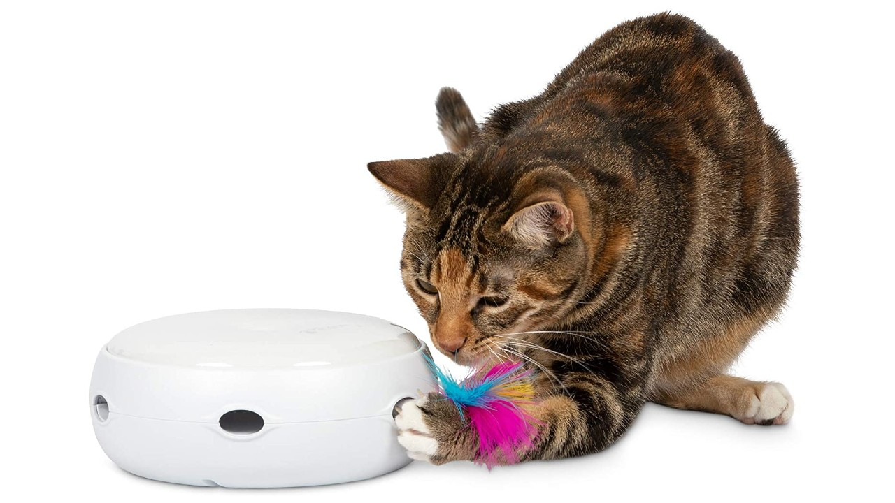 cat playing with interactive cat toy