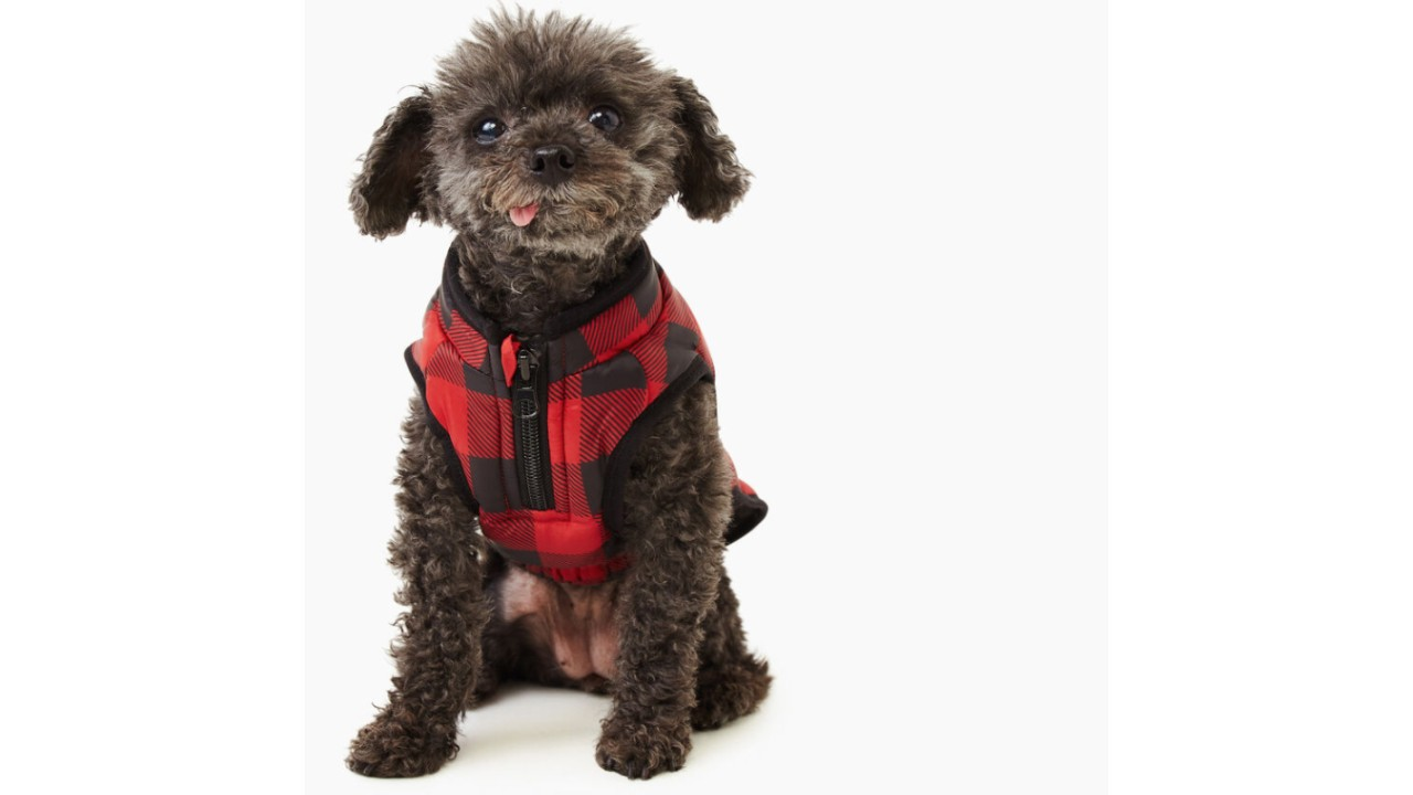 cute dog in plaid puffer jacket for winter