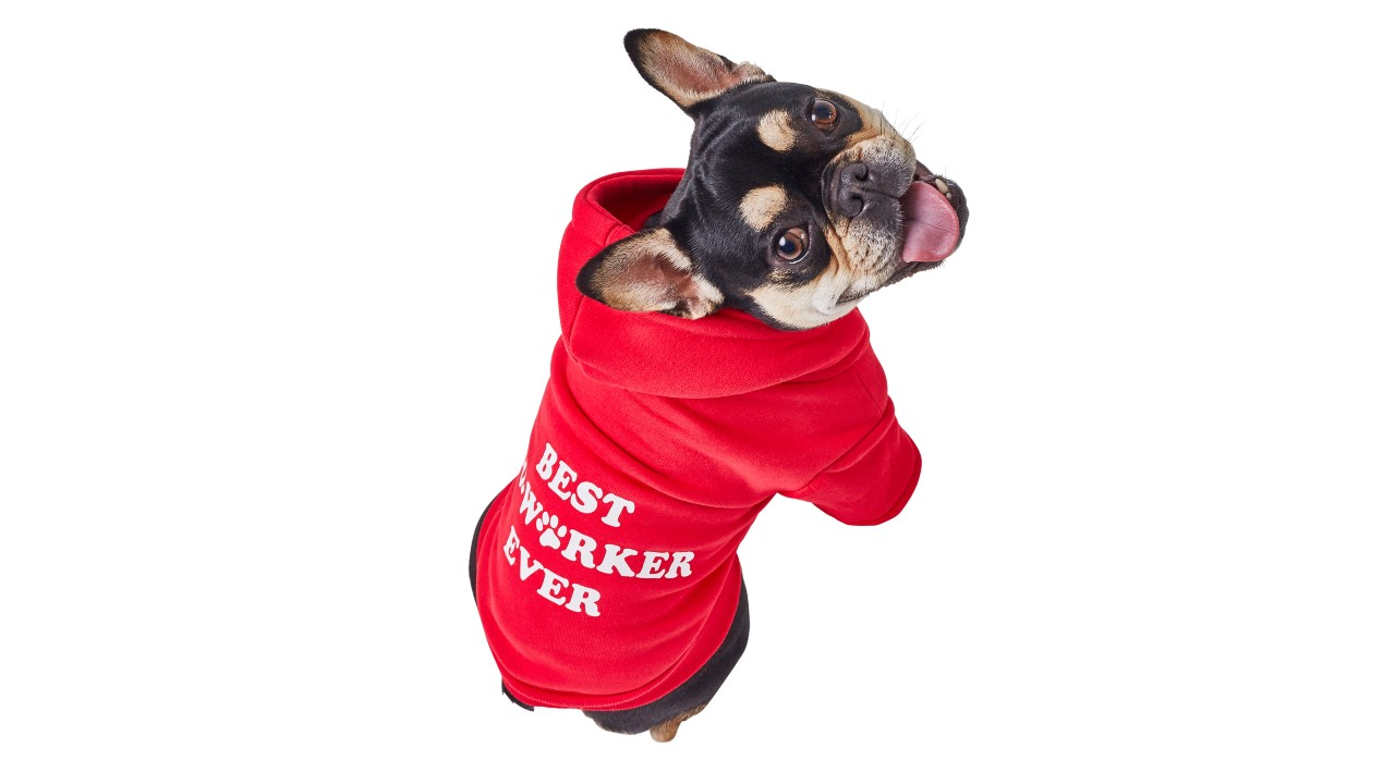 "dog wearing red hoodie that says ""best coworker ever"""