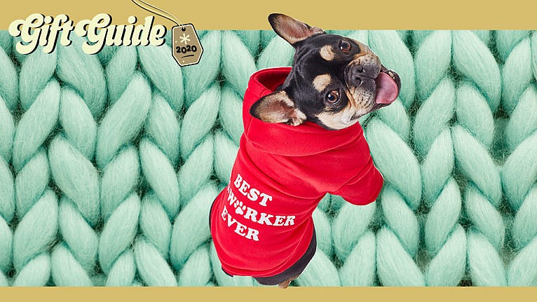 cute dog wearing sweater on knit background