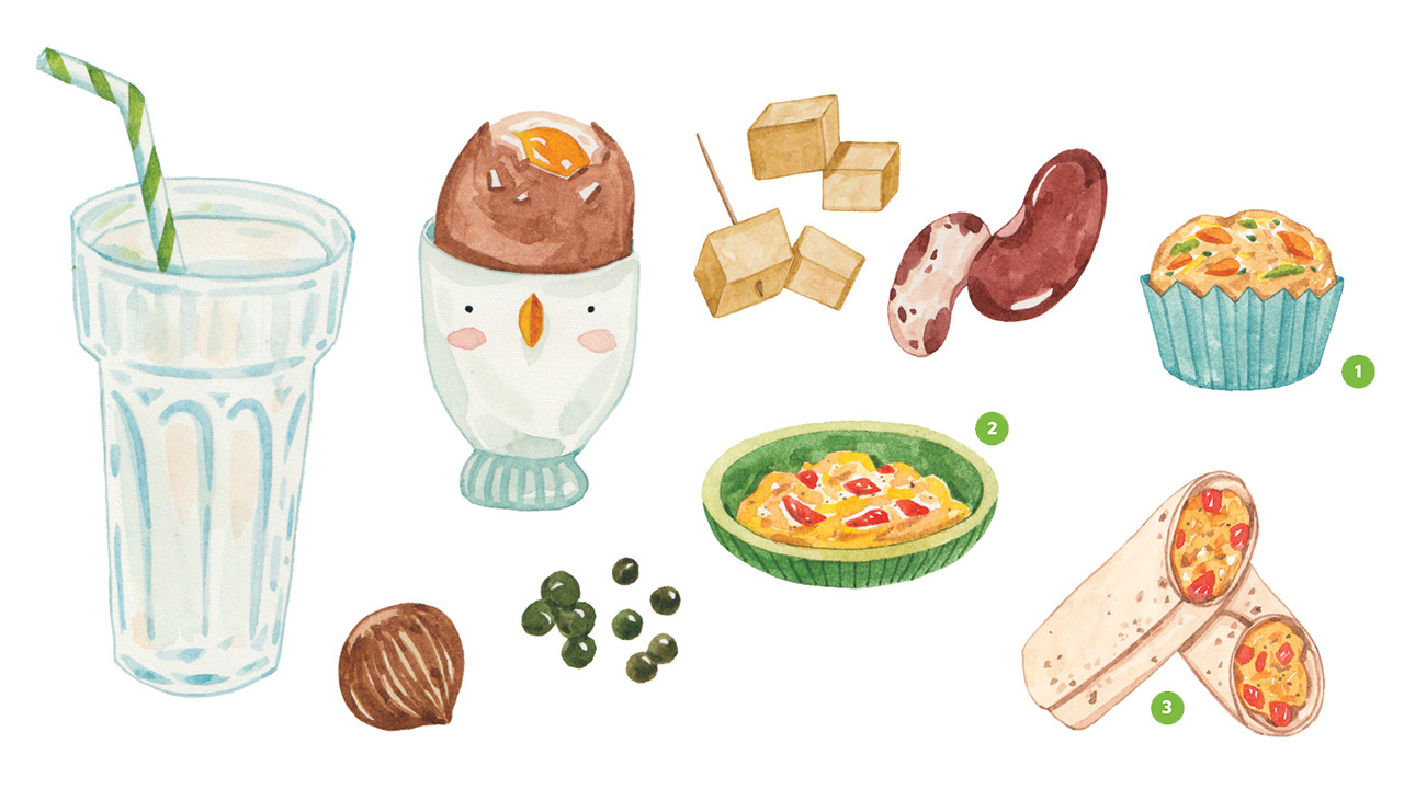 Realistic illustrations of a glass of milk, a soft boiled egg, tofu, beans, an egg muffin, scrambled eggs and an egg wrap all containing protein
